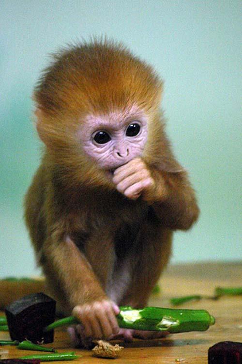 这么可爱的小猴子