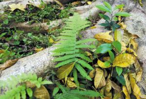 """,不是应该枝头发芽,春色满园的吗?殊不知,这种南国春来""""秋叶""""图片"""