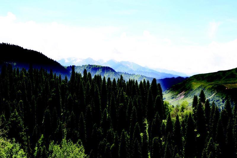 这里是新疆面积最大的原始胡杨林公园,也是整个塔里木河流域原始胡杨