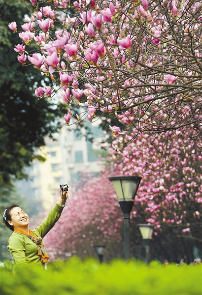 种春天开花的行道树