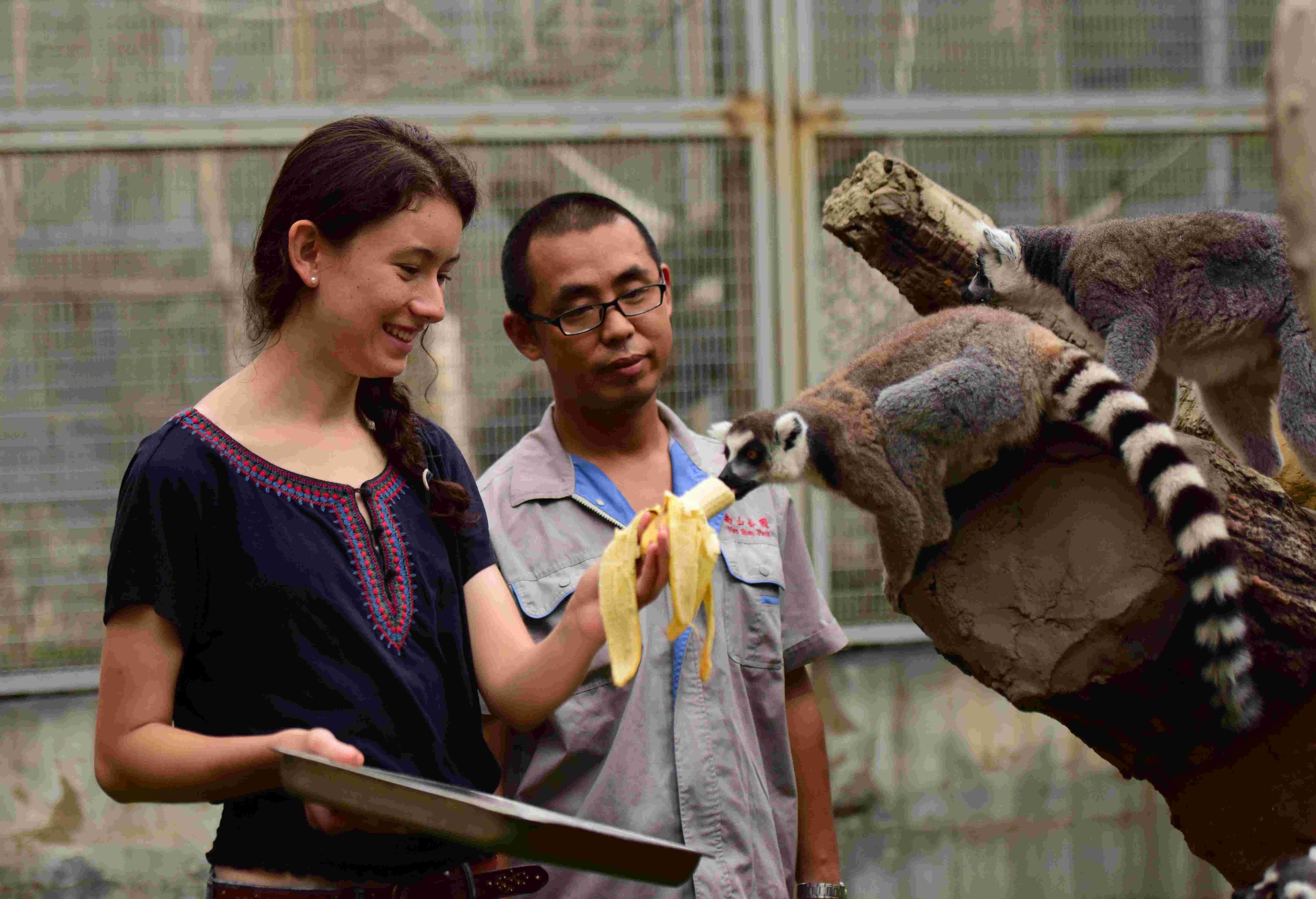新华社照片,烟台(山东),2015年8月5日   动物园里的洋义工   8月5日,在山东烟台动物园,美国女孩席琳在饲养员的指导下给环尾狐猴喂水果。   今年19岁的席琳来自美国旧金山,她是加拿大温哥华哥伦比亚大学一年级学生,今年7月来到山东烟台的鲁东大学学习中文,出于对动物的喜爱,席琳与烟台动物园取得联系并成为这里的一名义工。席琳的工作是帮助饲养员喂食以及打扫笼舍,空闲时间她还会和来动物园游玩的小朋友们用英文和中文交流,完成工作的同时,还能更多地了解中国。   新华社发(初阳 摄)