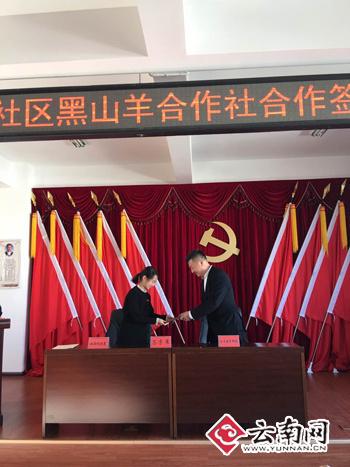 """楚雄推进""""党组织 合作社 电商""""脱贫攻坚模式"""